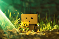 Danbo (17) @danbo/данбо2 (Robert Krstevski) Tags: robertkrstevskiblogspotcom robertkrstevski danboard danbomacedonia danbo danbostory danboamazon danborou 365danbo nature flowers flora photography photooftheday photograph photo photographer revoltech robot popular balkan europe spring данбо