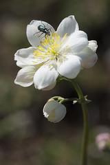 En el Parque de Santa Catalina de Badaia con Astrabuduko Foto Club (Javi Diez Porras) Tags: santacatalina macro flora afc