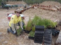 Landforms and Rehabilition Team Field Officer Peter Clear (OEHmedia) Tags: habitatrecreation wildlife threatenedspecies abandonedquarry worrigeenaturereserve greenandgoldenbellfrog