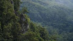 _DSC6279 copy (2careless) Tags: goldcoast queensland sony a7r2 contax zeiss springbrooknationalpark purlingbrookfalls 100mm f35 mt