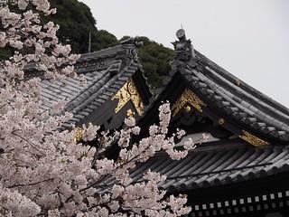 Hase-dera (海光山慈照院長谷寺)