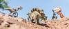 Frankensteinosaurus Photobomb (Reiterlied) Tags: 18 35mm d500 dslr dino dinosaur frankensteinosaurus lego legography lens nikon photography prime raptor reiterlied stuckinplastic trap trex toy tyrannosaur velociraptor velociraptosaurusrex velocirex