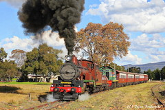 Departing Ballandean (Dylan B`) Tags: qr queensland rail warwick stanthorpe wallangarra southern downs steam railway granite belt darling sunny sunset smoke train night c17 971