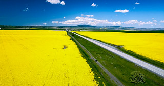 An export from my DJI Mavic over a canola field
