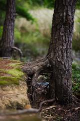 walk about Harris Lake 45 (furrycelt) Tags: harrislake newhillnc nikon85mmf14afd nikon85mmf14 northcarolina shearonharrisreservoir ianwilson jianwilson photographersoftumblr 85mm d600 nikon forest furrycelt lake lensblr natural nature trees water woods