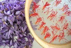 PISTILLI E PETALI DI ZAFFERANO PISTILS AND SAFFLOWER PETALS (Anna Rita Di Barnaba www.zaffineria.com) Tags: abruzzo essiccazione zafferano 100naturale saffron italy