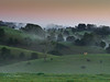 Maleny 21 (Lesmacphotos) Tags: hill tree forest cattle cow bullock green sunrise rolling