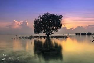 Alone Reflection