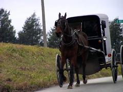 5-02 Amish Buggy (megatti) Tags: amish buggy horse lancaster pa pennsylvania