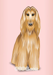 910003 (Osoq.com) Tags: wwwosoqcom pet animal caricature