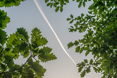 Nature Divided (Richard Croft136) Tags: roundhay park leeds west yorkshire evening sunset sky branches tree oak leaves green shadows woods foot path glow woodland forest trail jetstream jet stream plane aeroplane aero