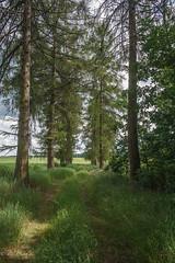 Reytan chapel. Larch (Kathlyn.s) Tags: belarus reytans residence history hroszovka trees larch field sky clouds canon 5d carl zeiss distagon t 28