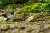 Gütersteiner Wasserfälle (matthewjpollard) Tags: waterfall swabian germany hike stream 50mm minolta a6000
