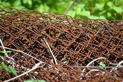 A Link To The Past (KaDeWeGirl) Tags: newyorkcity bronx pelhambaypark rust chain link fence forgotten leftbehind abandoned neglected explore