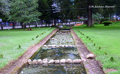Garden Water Stream (M.RISHAN SHAREEF) Tags: nature native earth water garden culture leaves family green grean grass lighting thenature morning evening nuwareliya srilanka tree wildlife
