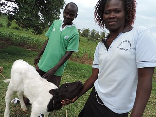 The Migot family display their new improved calf in Kiotieno, Homa Bay