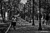 Vida al aire libre (Jaime Recabal) Tags: canon 40d recabal santiago parqueforestal blancoynegro blackandwhite monochrome sigma chile
