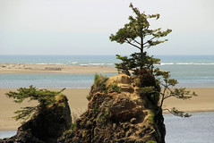 Siletz Bay Park, Lincoln City, Oregon (nikname) Tags: siletzbaypark lincolncity lincolncityoregon pacificnorthwestcoast pacificnorthwest pacificnorthwestbeaches rockybeaches beach usaparks oregonparks oregonbeaches treesonrocks trees