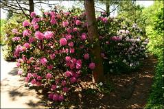 DSC_8811 (facebook.com/DorotaOstrowskaFoto) Tags: ogródbotaniczny kwiaty powsin warszawa