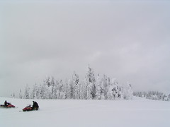 REVELSTOKE SNOWMOBING TRIP....AWESOME AND AMAZING!  (B.C.) (vermillion$baby) Tags: bc done hosrstmans ice mountain revelstoke snow snowmobiling tree trees treestree white winter snowf revelstokef