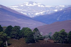 Looking north from Deeside. (artanglerPD) Tags: deeside hills snow trees heather mountains
