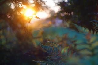 Helios sunset #1
