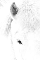 The Horse (Renate van den Boom) Tags: 04april 2017 europa gelderland highkey jaar maand nederland paard putten renatevandenboom stijltechniek zoogdieren zwartwit
