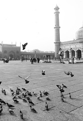 In The Square Of The Great Mosque (peterkelly) Tags: bw digital canon 6d india asia delhi jamamasjid greatmosque mosque square minaret pigeons pigeon birds bird