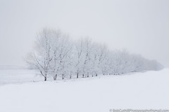 One Winter's Morn (westrock-bob) Tags: winter peaceful garage ab cuthill canon trees field copyright rural fog 6d alberta frost outdoors canada eos tourism hoarfrost white