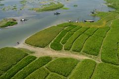 Our green land! (ashik mahmud 1847) Tags: bangladesh landscape river water green boat people pattern nikkor d5100