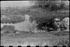Glimpses from the river valley, late spring 2017 (Other dreams) Tags: fed2 jupiter8 fomapan400 paranols pomerania poland spring redfilter