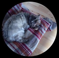 Just Jinks (quietpurplehaze07) Tags: jinks blanket bed tartan ipad air