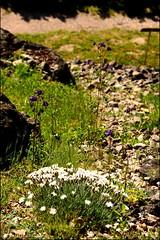 DSC_8839 (facebook.com/DorotaOstrowskaFoto) Tags: ogródbotaniczny kwiaty powsin warszawa