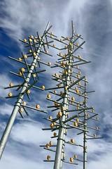 Engineered branches (Ricky Leong) Tags: calgary alberta canada random urban photowalk art publicart ca