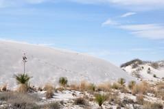 2-068 Dunes (megatti) Tags: desert dunegrass dunes grass newmexico nm sand sanddunes whitesandsnationalmonument