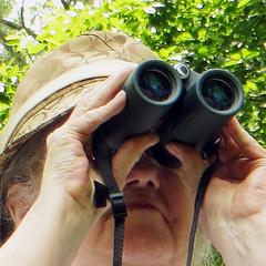 birds birdwatching birdwatcher hobbies