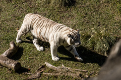 2 (Gabriel Fila) Tags: temaiken zoo zoológico parque temático animales
