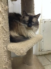 Figg - 7 year old neutered male