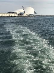 0417 Australia (26) (ChrisJS2) Tags: westaustralia westernaustralia swanriver swanrivercruise