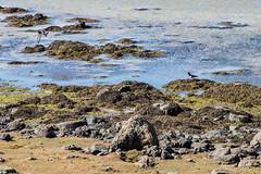 IMG_7844 (Islandsmjoll.is) Tags: breiðavík fókus fókusferð1214mai2017 garðar iceland island kollavík látrabjarg patreksfjörður patró rauðisandur reiðskörðábárðaströnd vesturland beautiful dásamlegt fallegt landskape landslag lighthouse skeljar vestfirðið viti wwwislandmjollis