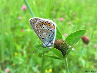 Butterfly 1328