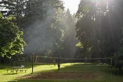 Rain or shine - HSS! (JSB PHOTOGRAPHS) Tags: dsc665000007 rain sunlight bench tree nikon v2 1030mm grass armitagepark campground sliderssunday hss