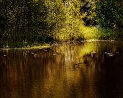 Secret place (BirgittaSjostedt) Tags: landscape water forest light sun loom reflections color tree summer mystery magic fairy tale magicunicornverybest ie lake birgittasjostedt