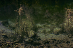 Sweetwater Algas (lifeperspect) Tags: salzburg austria bluntautal bluntau valley water algas plants lakeside fuzzy nature
