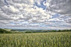 _DSC8459_CD_v1 (Pascal Rey Photographies) Tags: drôme drômedescollines blé nature paysages landschaft landscape horizon nuages clouds ciel cieux cielo sky photographiecontemporaine nikon d700 digikam digikamusers aurorahdr collines pascalreyphotographies autofocus luminar