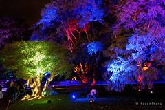20170531-44-VIvid Light display at Sydney Botanic Gardens (Roger T Wong) Tags: 2017 australia nsw newsouthwales rogertwong sel2470z sony2470 sonya7ii sonyalpha7ii sonyfe2470mmf4zaosscarlzeissvariotessart sonyilce7m2 sydney sydneybotanicalgardens vivid festival illuminated lights night tree