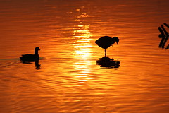 The Orange Birds (ravikanth_3110) Tags: sunraise bird beaty canon beautiful orange silhouette