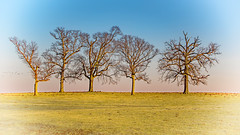 Five Trees (myoldpostcards) Tags: rural country landscape campbellcemetery road rd sangamoncounty centralillinois illinois il myoldpostcards randall randy vonliski seasons winter fivetrees canon eos 7dmarkii pastel color artsy near sunset goldenhour