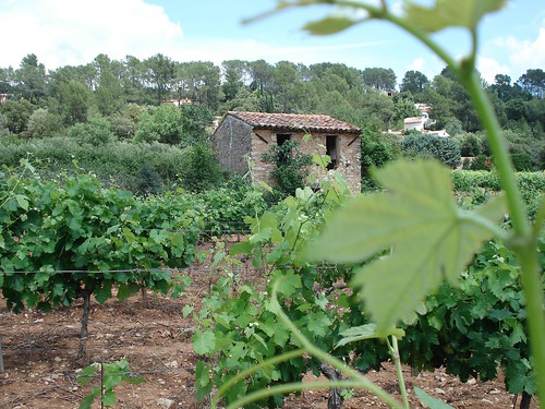 Cabanon dans les vignes