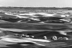 I Can See For Miles (Ryan McGinty) Tags: ryanmcginty landscape scenic blackandwhite fields washington steptoebutte willowtrees blooming sunset spring dapplesunlight windmills stormclouds